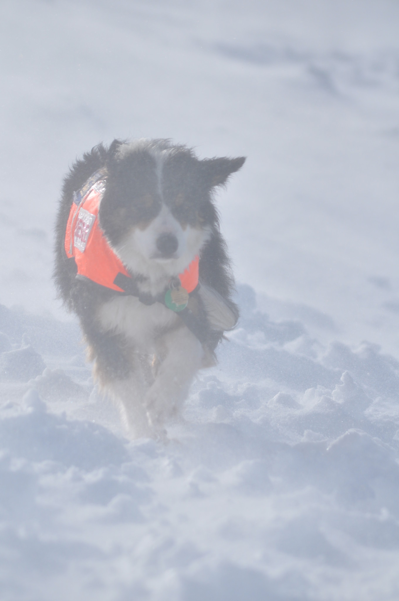 Cumbria Mountain Rescue Dogs