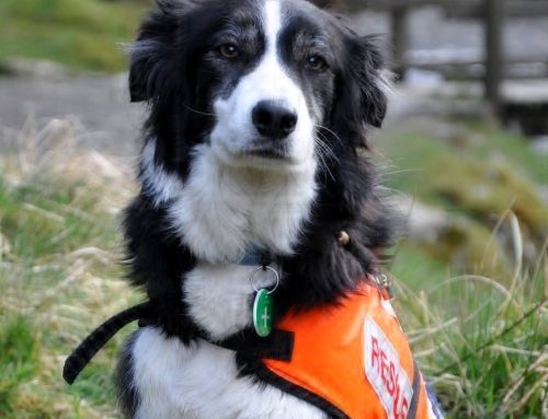 Sad News – Retired Search Dog Dottie Passes Away.