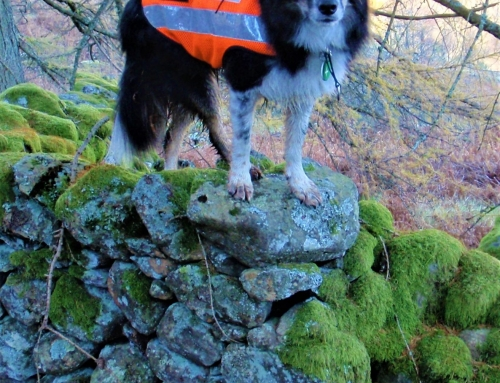 Search Dog Meg